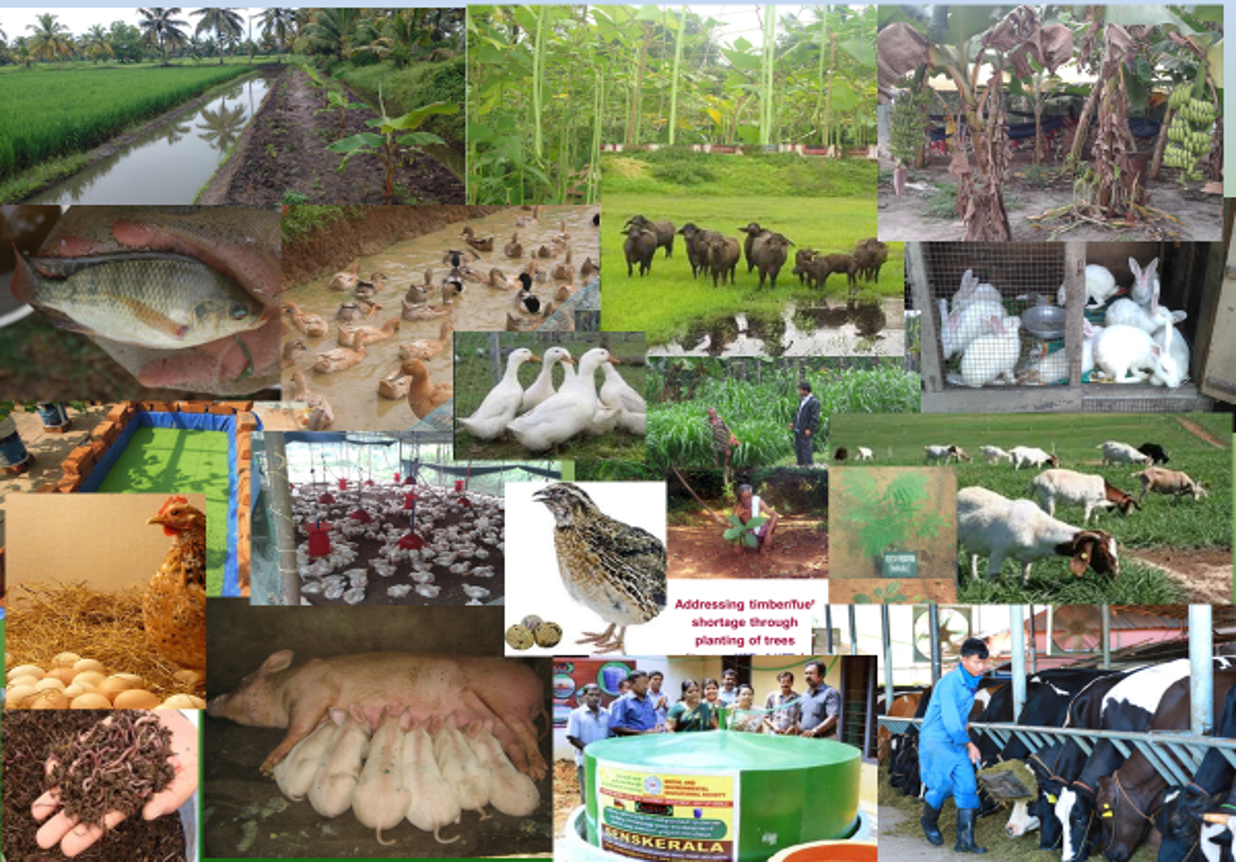CoA, Wayanad:  Livestock and Poultry Management (ANHS - 1201)