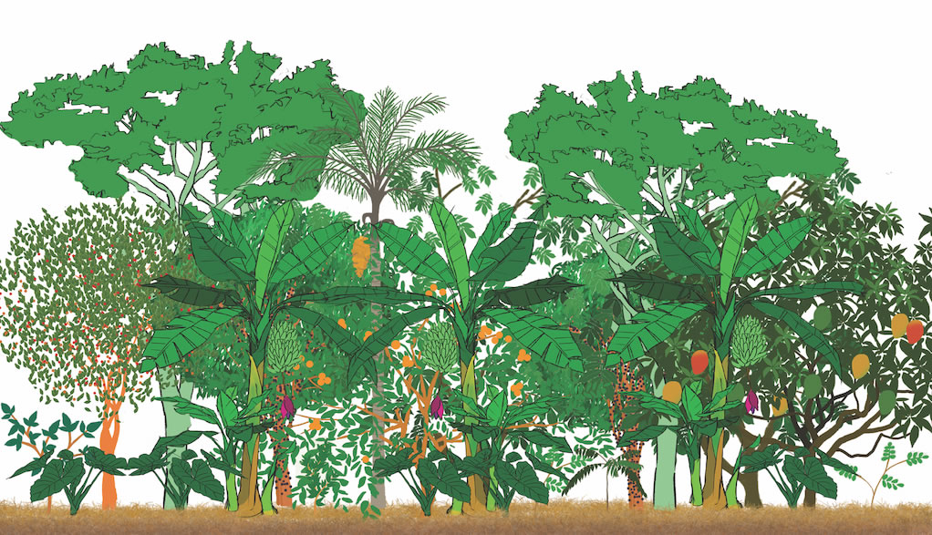 Safo 2209 Agroforestry Systems and Management 1+1