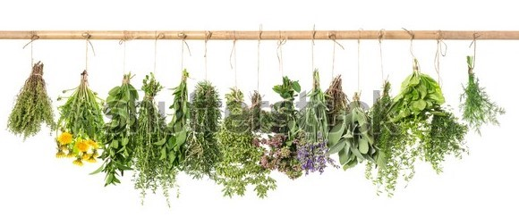 Fbti 2206 Medicinal and Aromatic plants- 1+1