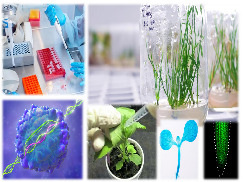 MBB 514 Plant Genetic Engineering (1+1)