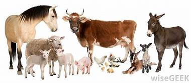Anhs. 1201 Livestock and Poultry Management -( 1+1 )