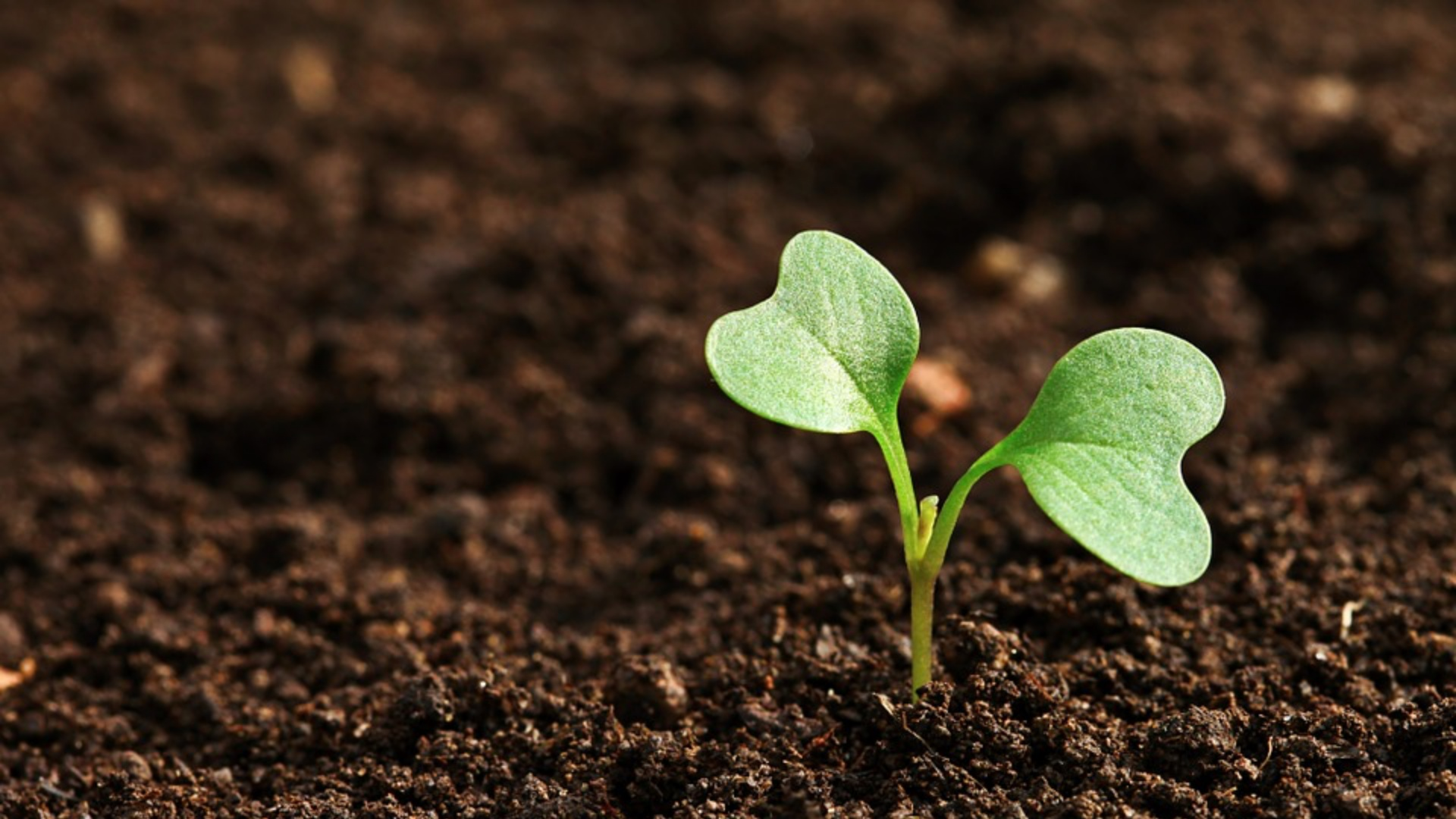DAgri.02 Principle and Practice of Agronomy -II  DAgri.02