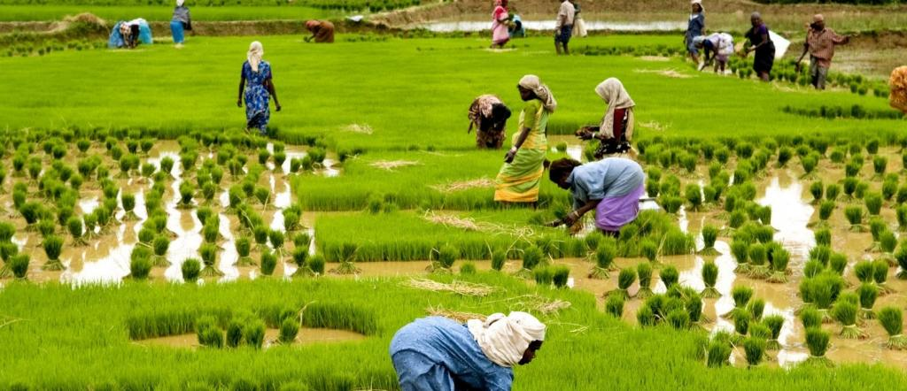 DAgri.03 Agronomy of Field Crops –I
