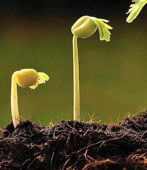 DAgri.06 Soil Fertility & Fertilizers