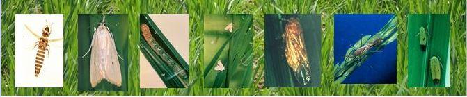 DAgri.16 Crop Pest Management I