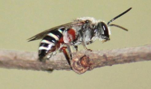 Narm 2104 Forest Entomology (1+1)