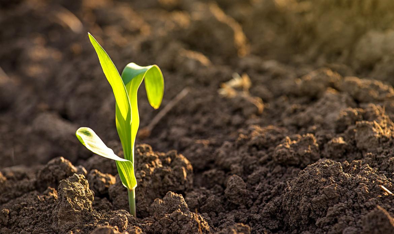 Sacs 1104 Principles of Soil Science (2 + 0)