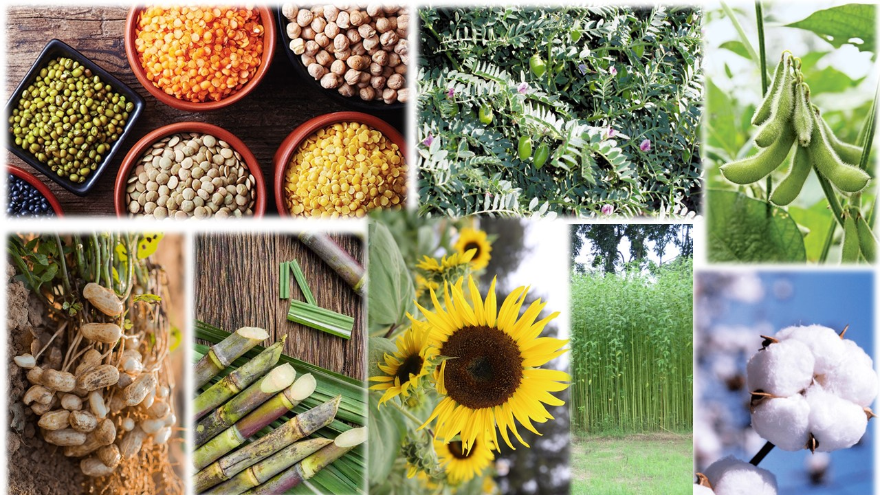 Agro 2205  Crop Production Technology -II (Pulses, Oilseeds, Sugar and Fibre Crops(1+1)