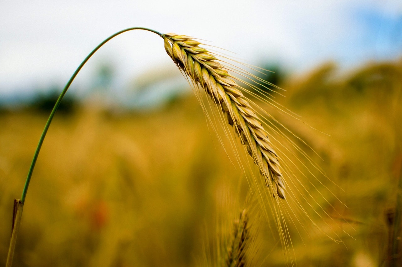 2020- AGRONOMY OF FIELD CROPS -I